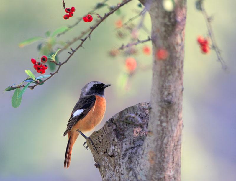 Картинка дерева с птицей